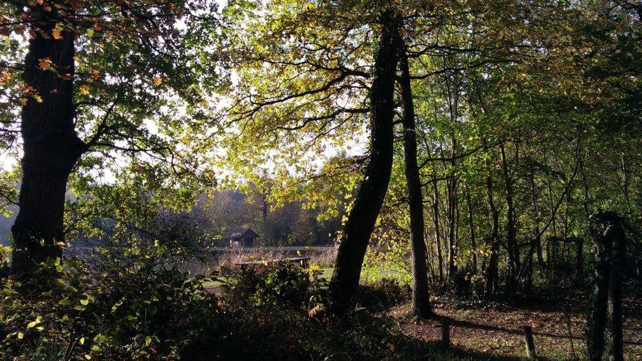 Forêt dominicale de Brain-sur-Longuenée